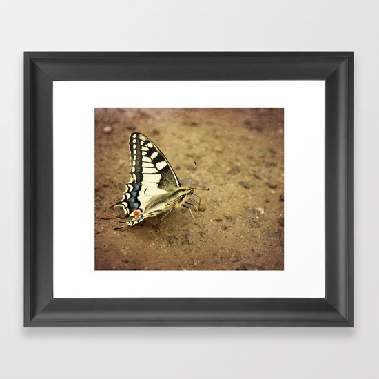 Swallowtail butterfly Framed Art Print