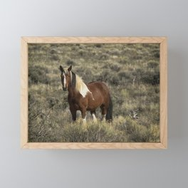 Beautiful Mare from South Steens No 2 Framed Mini Art Print