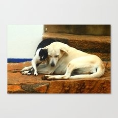 Like cats and dogs Canvas Print
