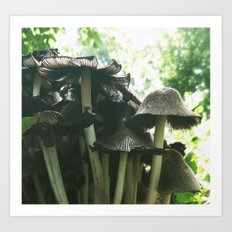 Magic mushrooms series - take 1 Art Print