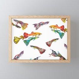 Tropical Colors, Guppy Aquarium Fish , Aquarium Art Underwater Framed Mini Art Print