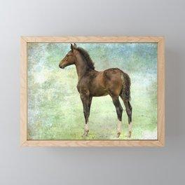 Bred for Beauty lt Framed Mini Art Print