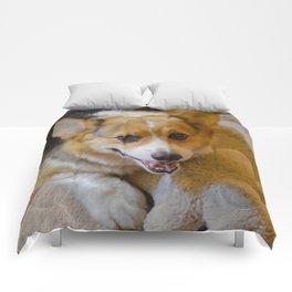 Josh The Corgi Comforters