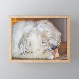 Cute sweet furry dog eating a bone, lying on a wooden parquet floor Framed Mini Art Print