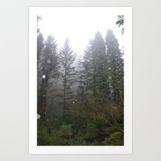 Rainy Foggy Day in the Portland Forest Art Print