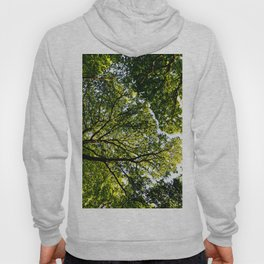 The quiet Forest Hoody