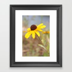The Wild Black Eyed Susan Framed Art Print