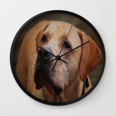 Golden Labrador Wall Clock
