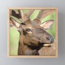 Watercolor Elk Bull 31 Framed Mini Art Print