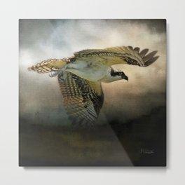 Osprey Soaring Metal Print