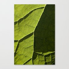 Leaf Veins I Canvas Print