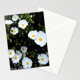 Daisy 9- Marguerite oxeye Stationery Cards
