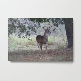 Buck in the Oak Mott Metal Print