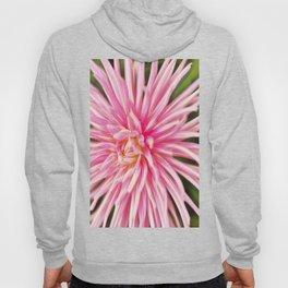 Rapturous Pink Dahlia Hoody