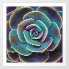 Purple & Blue Succulent Art Print