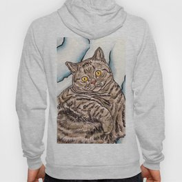 Grey Cat Hoody
