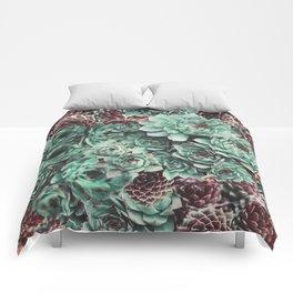 Succulent Sempervivum Plants Comforters