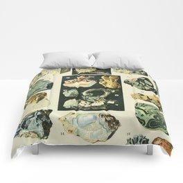Vintage Minerals Chart Comforters