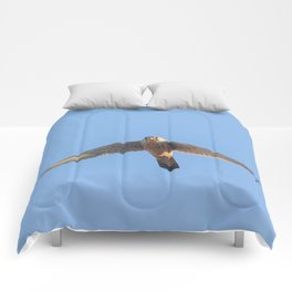 Common Kestrel (Falco tinnunculus). Common Kestrel in flight Comforters