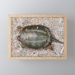 Snapping Turtle2-from the top Framed Mini Art Print