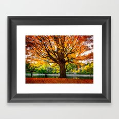 Many colors of fall Framed Art Print