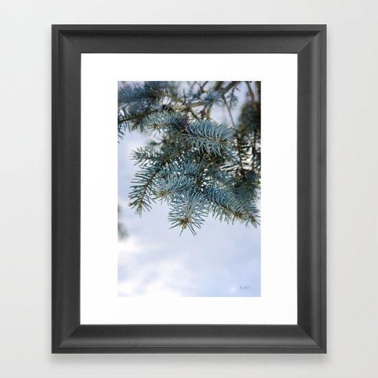 Blue Spruce Framed Art Print