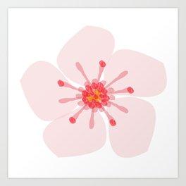 Sakura flower Art Print