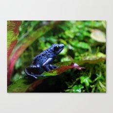 Blue Poison Dart Frog Canvas Print