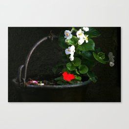 Flowers in an iron pot Canvas Print