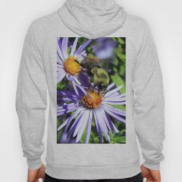 Pollen Dusted Bee on Asters Hoody