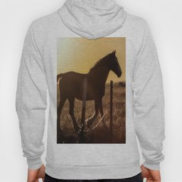 Wyoming Clydesdale Hoody