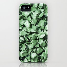 green leaves background. pattern of Eucalyptus palm fern different tree iPhone Case