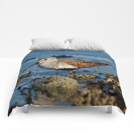 Bird on the Beach / A Solitary Dunlin Comforters