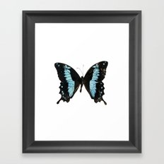 Butterfly #4 Framed Art Print