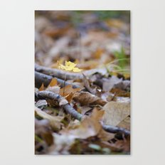 Seedling - B Canvas Print