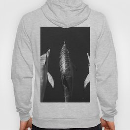 Beautiful wild dolphins black and white Hoody