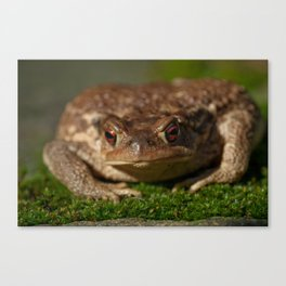 Toad 42 Canvas Print