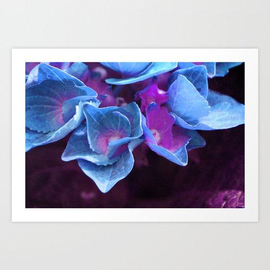 Hortensie 5 Art Print
