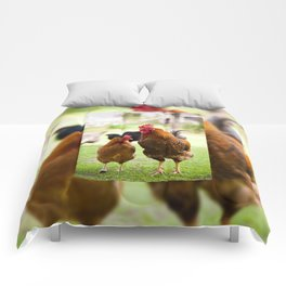 young Rhode Island Red chickens Comforters
