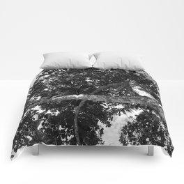Twist tree Comforters