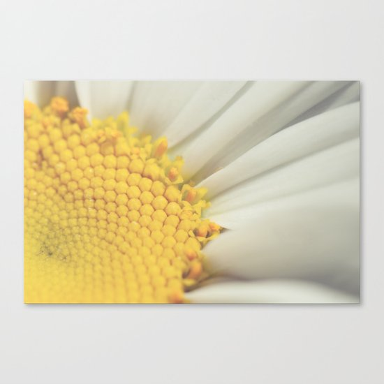 sunny side up Canvas Print