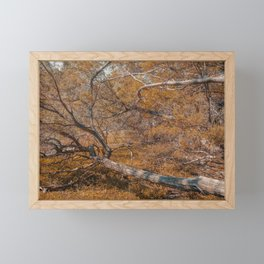 Fallen tree at Guadalupe River State Park Framed Mini Art Print