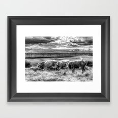 Late Afternoon Cows Framed Art Print