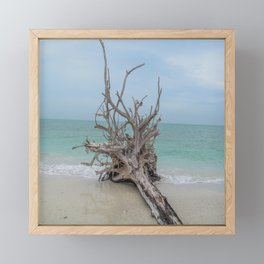 Remember Your Roots Framed Mini Art Print
