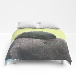 Clean Feathers Comforters