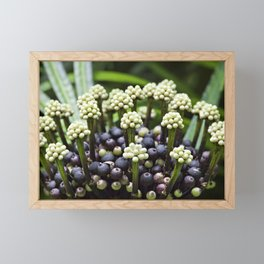 Miagos Bush Framed Mini Art Print