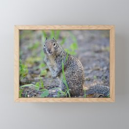 ground squirrel greeting Framed Mini Art Print