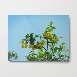Lemon Treetop Metal Print
