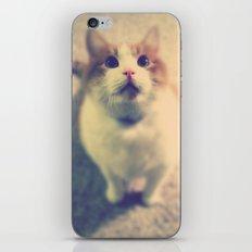 Pink Nose iPhone & iPod Skin