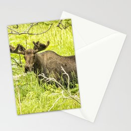 Bull Moose in Kincaid Park, No. 2 Stationery Cards